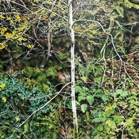 Treescape No 5 120 x 150cm £17500 (0254)