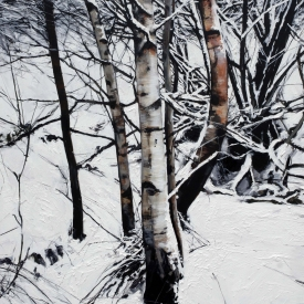 Silver Birches in Winter 5ft x 4ft